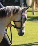 A pretty pony.