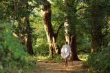 Zhara Church Forest