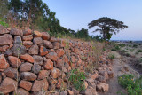 Stone Wall, Zhara Church Forest