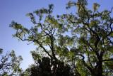 Gelawdios Forest