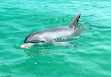 Swimmimg with the Dolphins