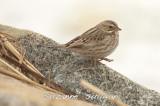 ipswich sparrow salisbury st res