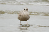 check out the stance interesting gull emerson rocks plum island