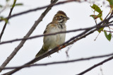 warden_sparrows_9-2-12