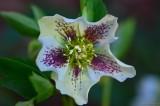 Winter flower Garden 2.