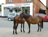 New Forest Ponies, Brockenhurst