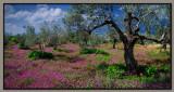 The 2011 spring panorama