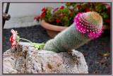The majestic phallus... :-))