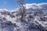 Last year's snow