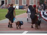 Accompanied by dogs