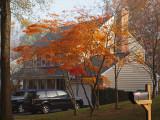 Orange in the neighborhood