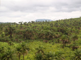 Palm trees cover the beautiful countryside