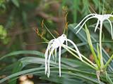 A strange white flower