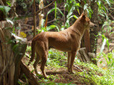 Djouma's dog