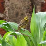 The bird in the yard