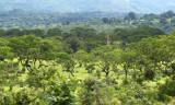 Vegetation as we zoom by