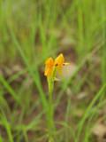 Solitary wildflower