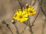 Unidentified Wild flowers