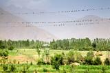 The birds - Navdi village, Gharm
