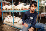 Boy selling live chickens - Esfahan