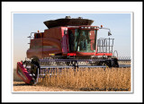 Case IH 6088 Combine Harvesting Soy Beans