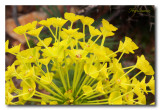 _MG_0785 nature fleur.jpg