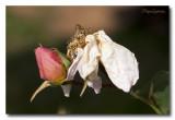 _MG_0808 nature fleur.jpg