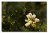 _MG_0874 nature fleur.jpg
