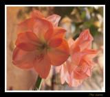 _MG_0686 nature fleur.jpg