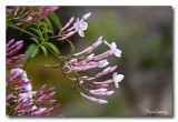 _MG_1095 nature fleur.jpg