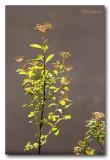 _MG_1257 nature plante.jpg