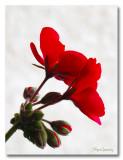 IMG_2469 nature fleur.jpg