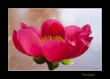 _MG_1318 nature fleur.jpg