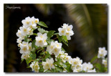 _MG_1376 nature fleur.jpg