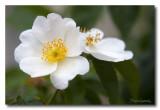 _MG_1390 nature fleur.jpg