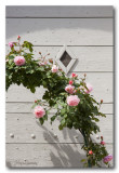 _MG_1395 village fleur.jpg