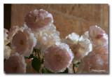 _MG_1466 fleur ville avignon.jpg