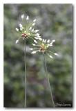 _MG_1708 nature fleur.jpg