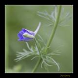 _MG_1756 nature fleur.jpg