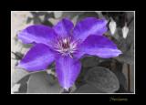 _MG_1726 nature fleur.jpg