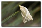 _MG_2106 nature fleur.jpg