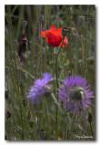 _MG_2118 nature fleur.jpg