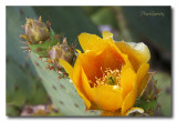 _MG_2119 nature fleur.jpg