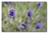 _MG_2385 nature fleur.jpg