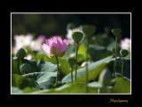 _MG_2745 nature fleur.jpg