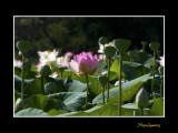 _MG_2746 nature fleur.jpg