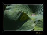 _MG_2755 nature fleur.jpg