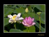 _MG_2763 nature fleur.jpg