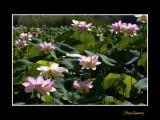 _MG_2796 nature fleur.jpg