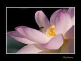 _MG_2803 nature fleur.jpg